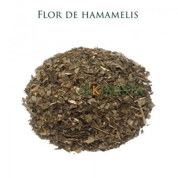 Hamamelis, flor cultivo...