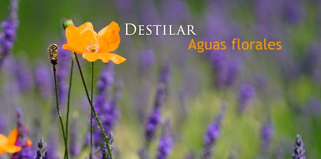 Destilar Aguas Florales
